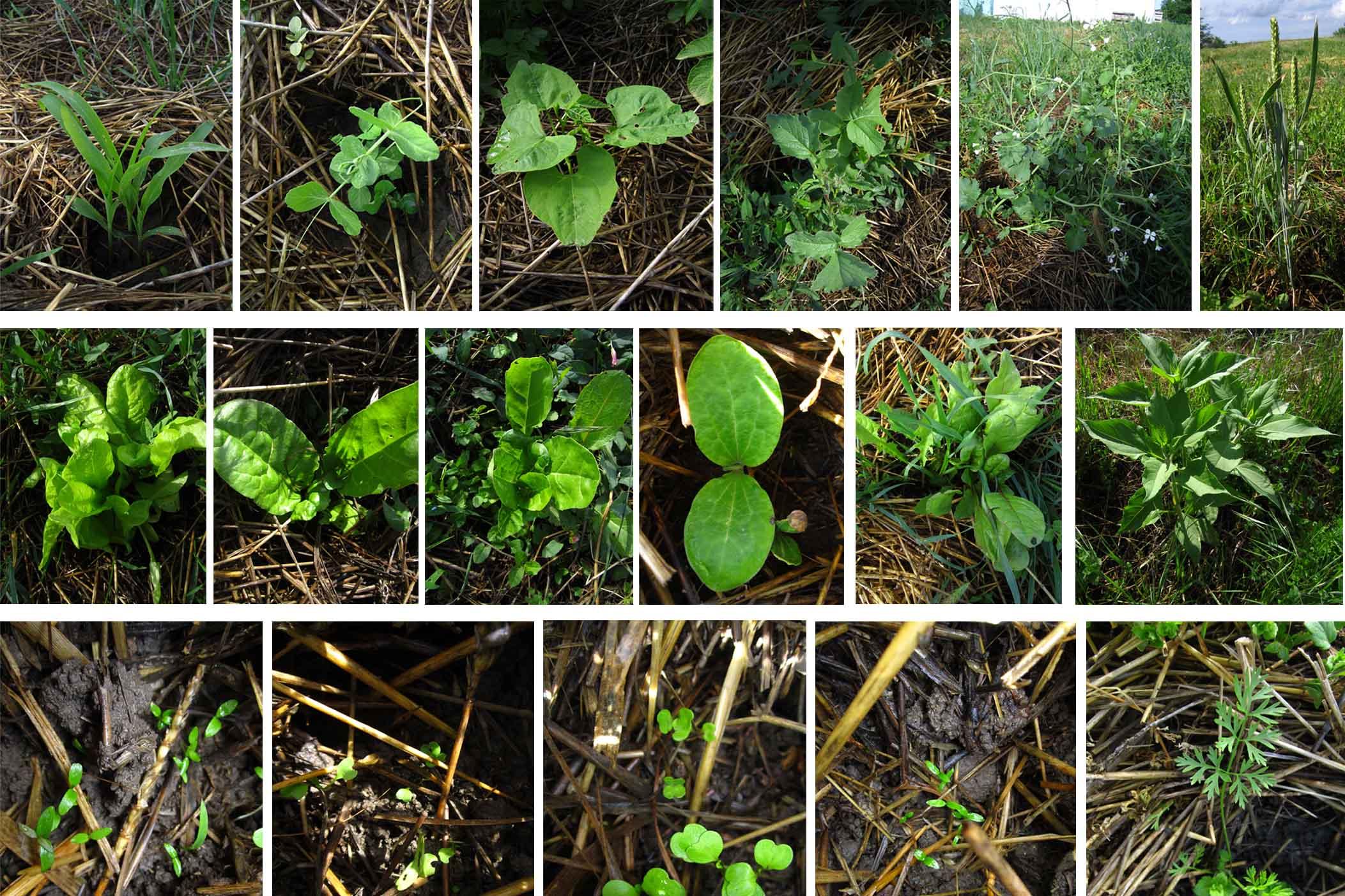 06 u carstu biljaka