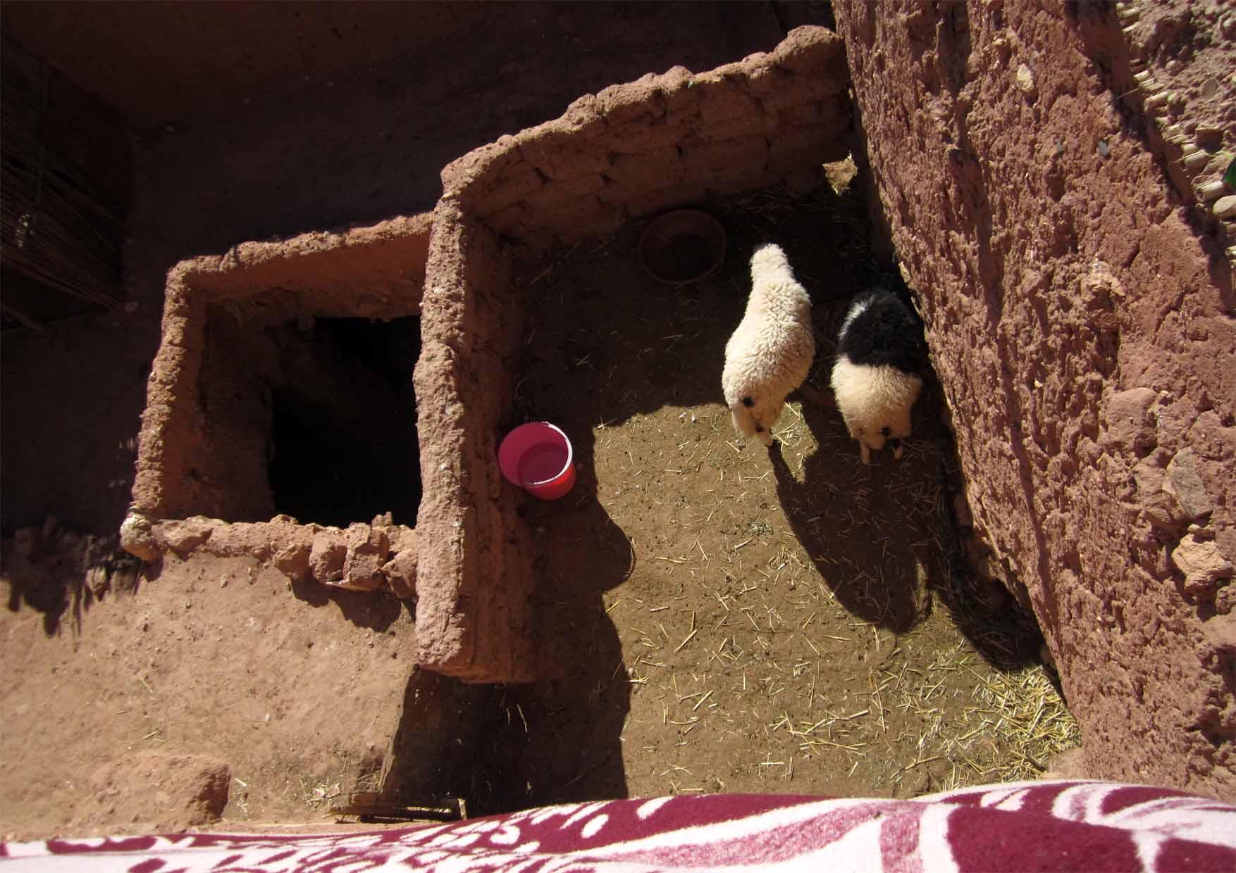 17 maroko ait ben haddou ravni krovovi i ovcice