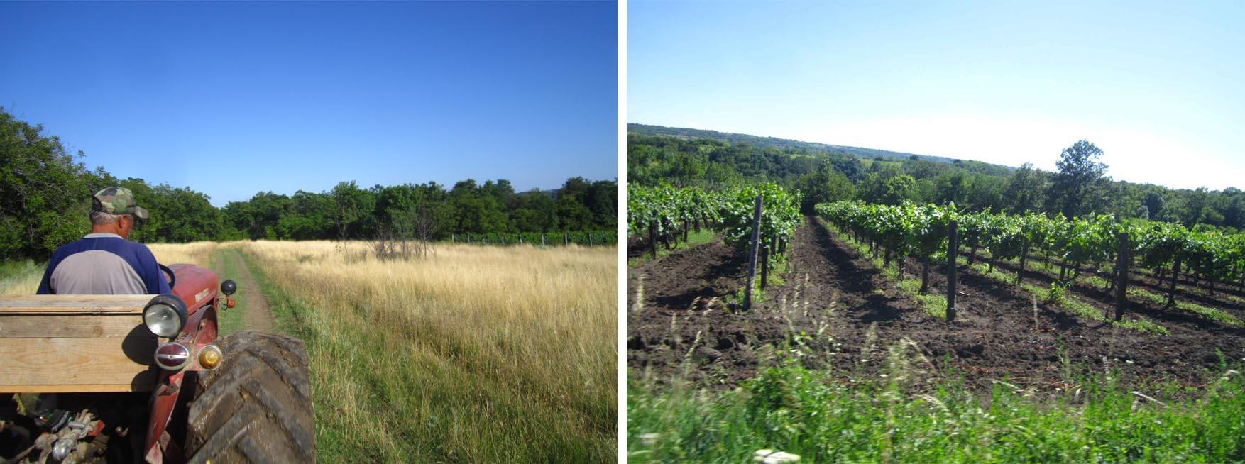 08 Rogljevo vinogradi