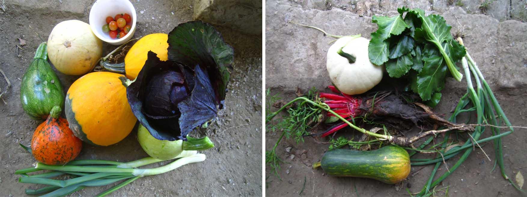 15 mosorin 19 oktobar plodovi oktobra