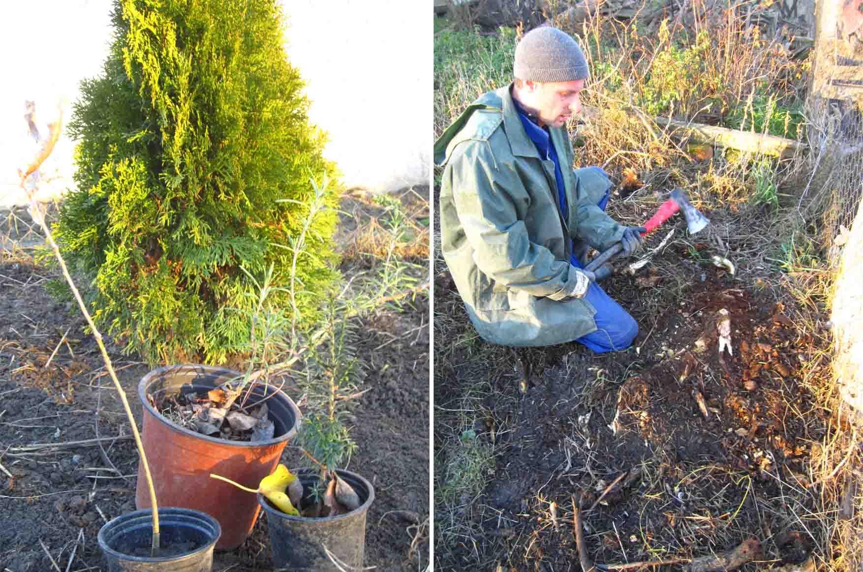 10 Mosorin decembar sadjenje tuja i ostalo