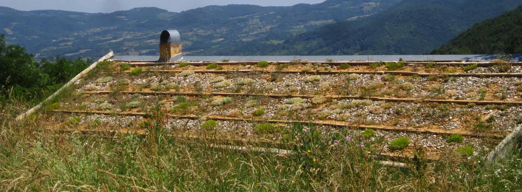 02 brusnica pogled zeleni krov