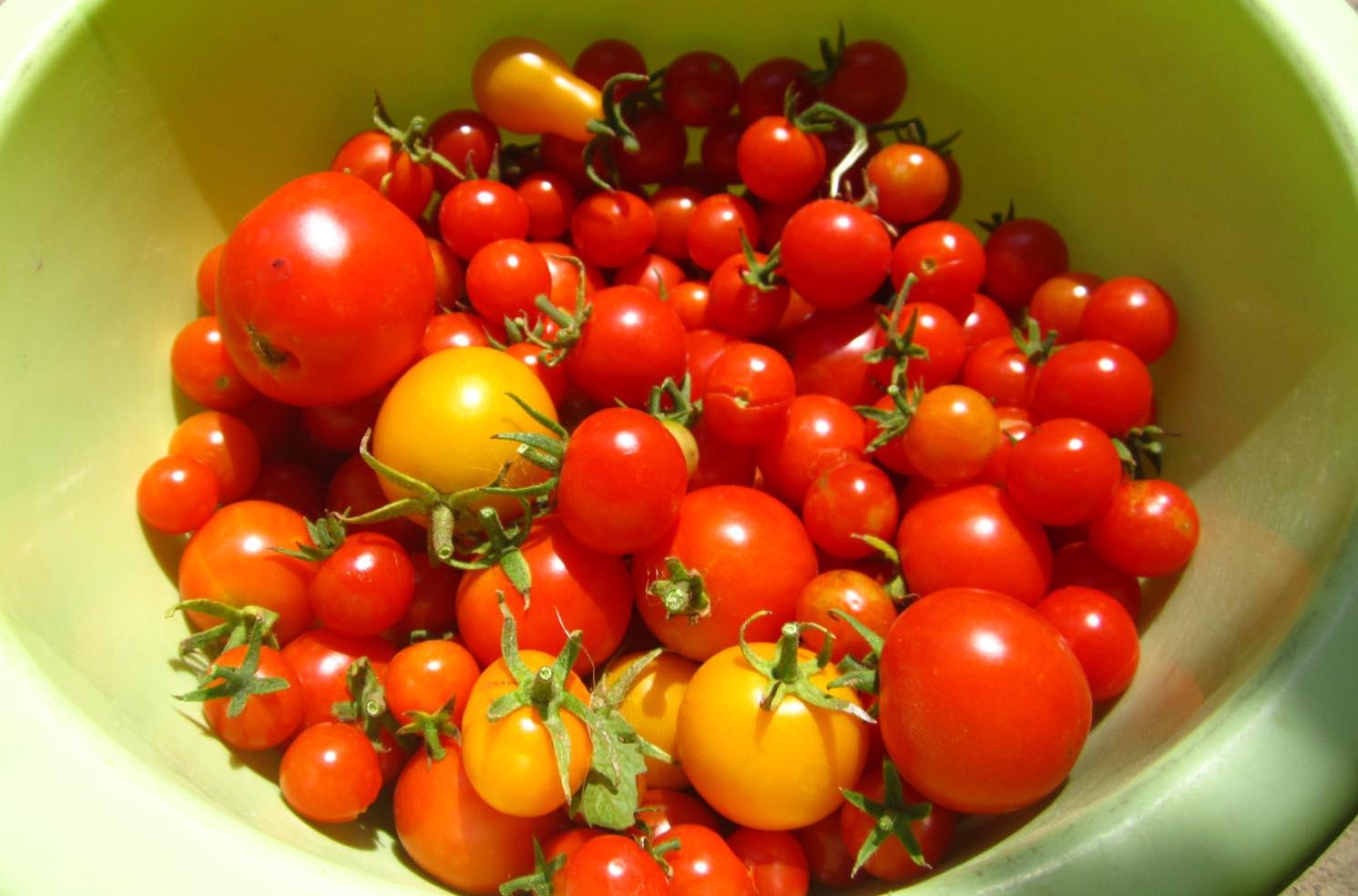 03 Mosorin paradajz