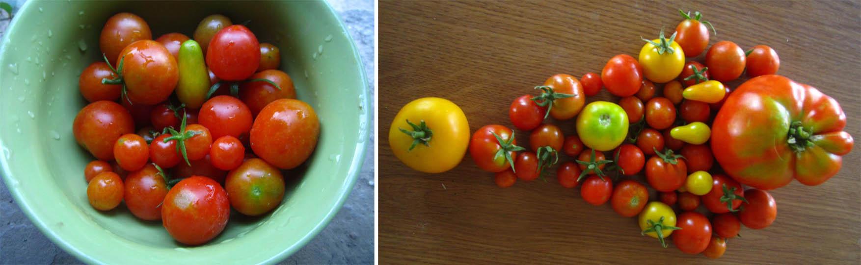 13a mORA 2015 paradajz