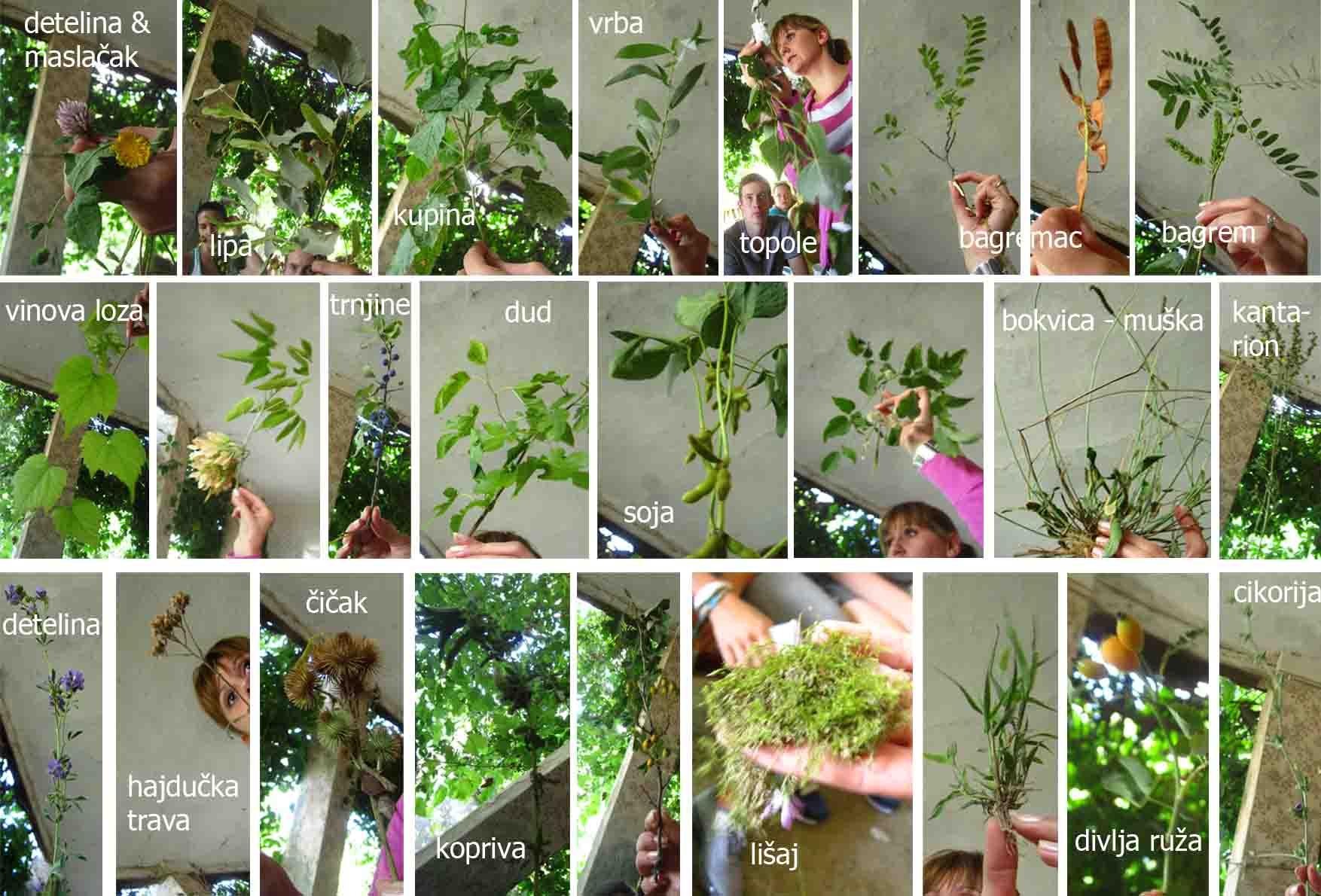 19 kamp zemljane gradnje II Jovanin cas sa biljkama