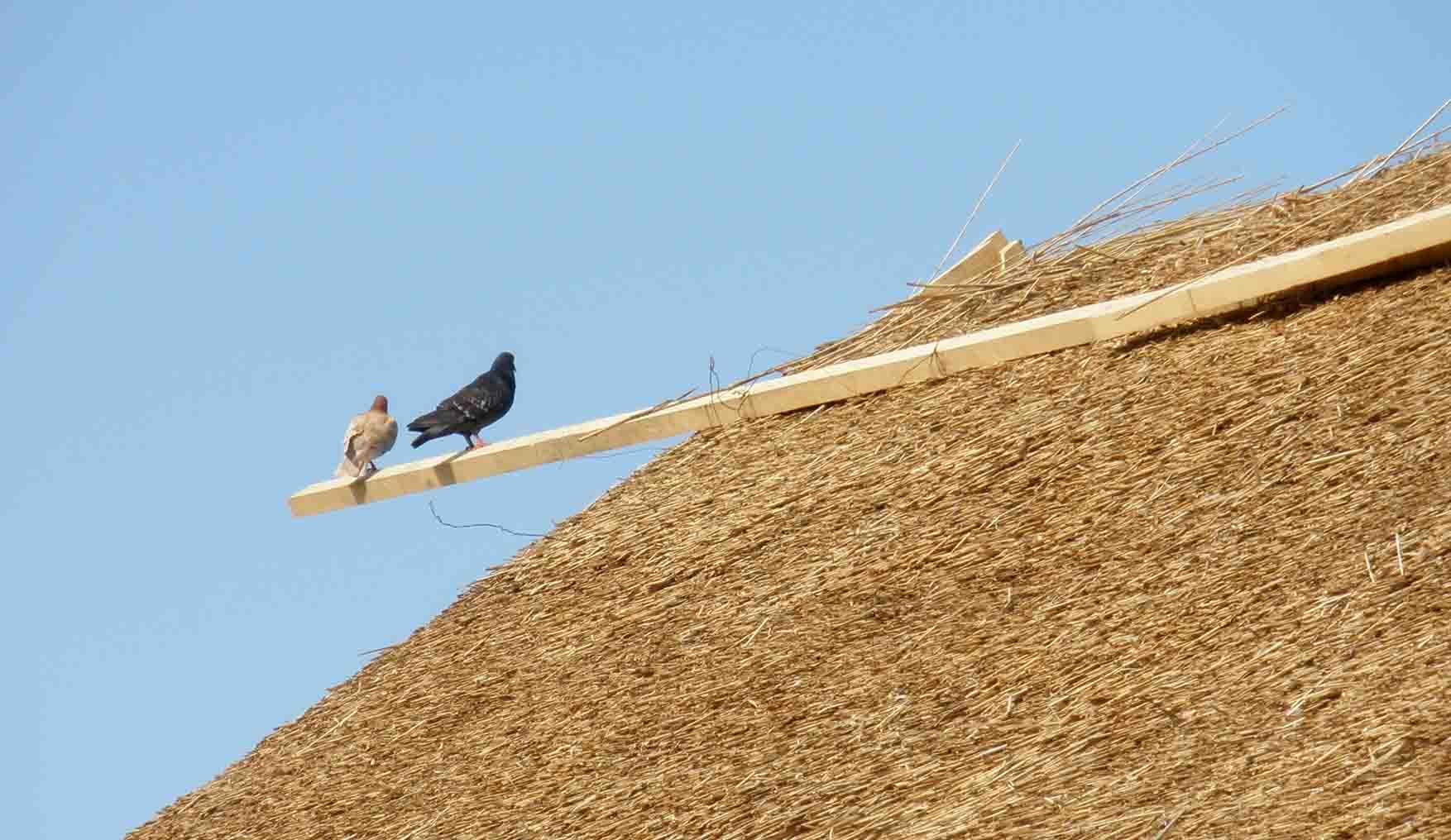 21 jun trska radionica trscani krov